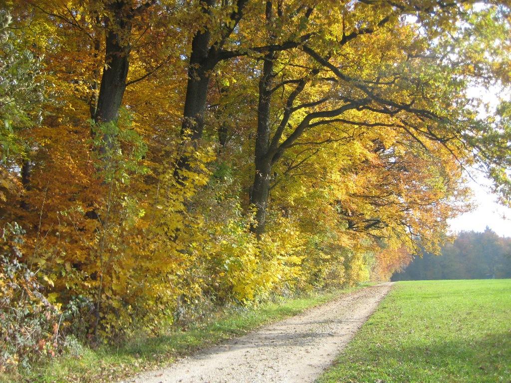 Herbstlicher Waldrand