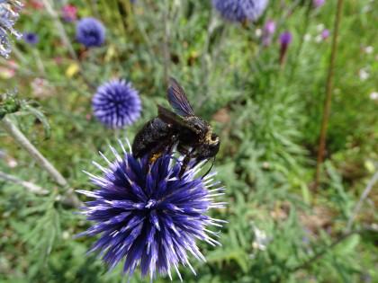 Biene Naturpark
