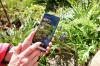 Pflanzenerkennung Smartphone