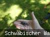 Walter Hieber Tipps für Waldentdecker Teil II