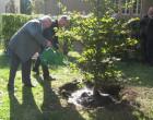 Der Gedenkbaum wird gewässert