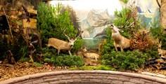Carl-Schweizer-Museum-Tiere