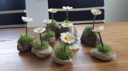 Gänseblümchen auf Stein