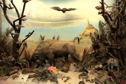 Carl-Schweizer-Museum Gruppe Büffel