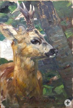 Rehbock 1902